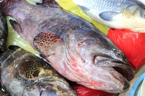 grouper fresh fish ice market strawberry