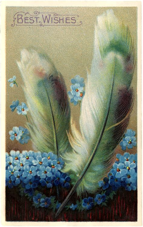antique feathers image pretty  graphics fairy