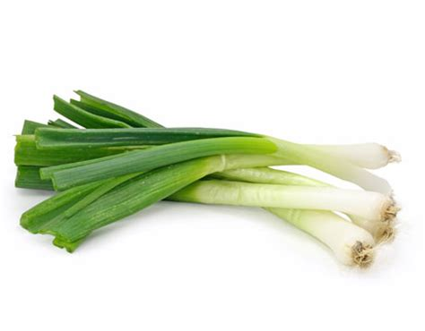 what are scallions opinions on scallion