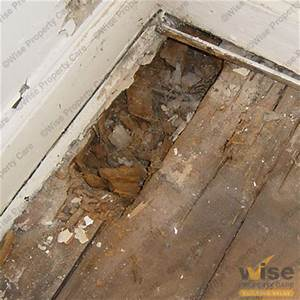 Dry rot signs tell tale signs of a dry rot issue for How to dry wet wood floor