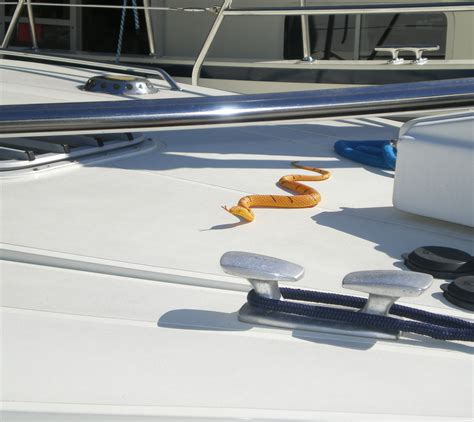 Keep Spiders Out Of Boat by Getting Rid Of Wasps Spiders Fruit Flies And Birds On