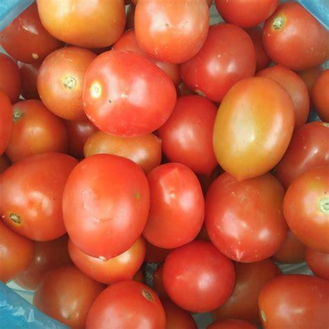 terkeren 21 sketsa bunga tomat