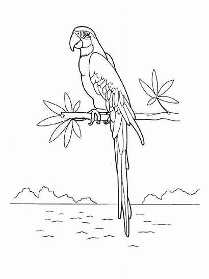 Coloring Macaw Pages Birds Printable Colors Recommended