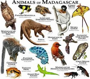 Animals of Madagascar by rogerdhall on DeviantArt