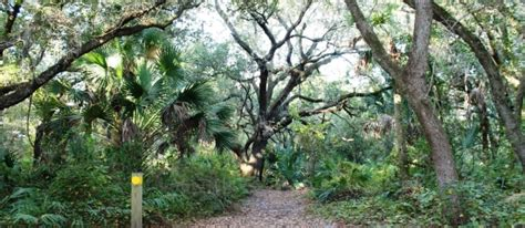 Xeric Hammock by Environmental Resources Management Delray Oaks