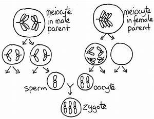 Open Genetics