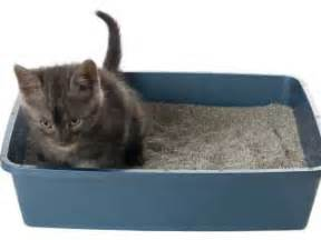 cat outside litter box top 5 litter box problems and how to overcome them