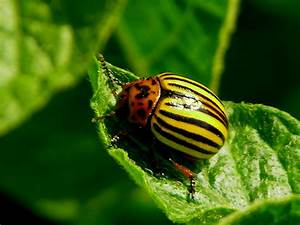 5 Common Garden Insects and Pests - gardenswag