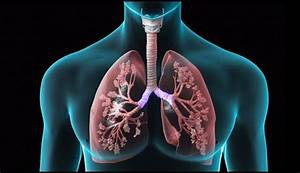 Diagram Of Lung Copd