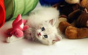 Beautiful Cute Kitten Desktop Wallpapers | HD Wallpapers ...