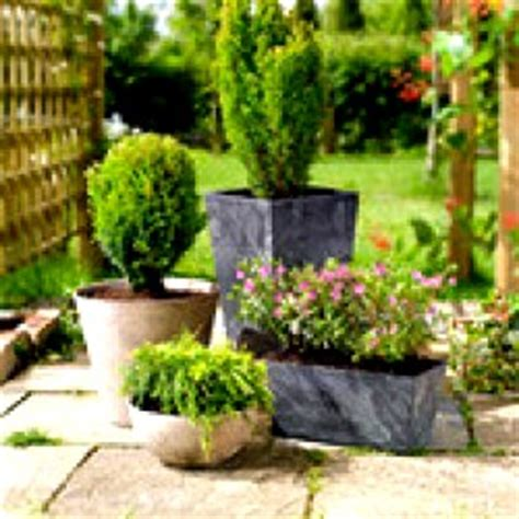 potted trees for patio using shrubs in container gardens enjoy container gardening 4373