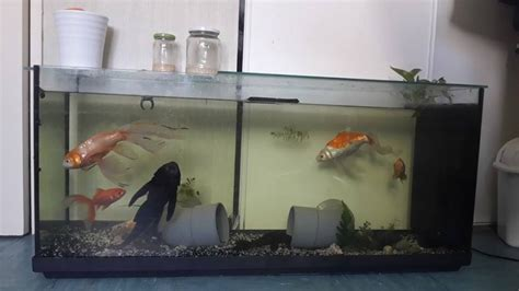 mes aquarium asiatique