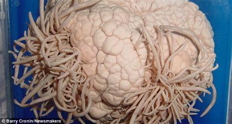 rabbits toilets parasites  toothpicks explore