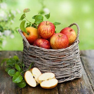 rx   apple trees organic gardening mother earth news