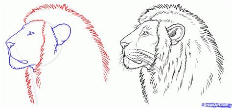 step    draw  real lion draw lions