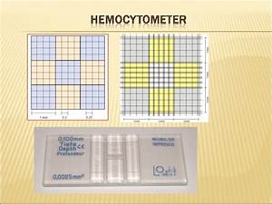 Hemocytometer Manual Cell Counting  1