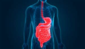 All About Stomach Cancer  Gastric Cancer Basics