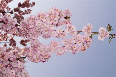 Free Images : tree branch flower petal food spring
