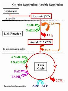 What Is The Balanced Chemical Equation For Cell ...