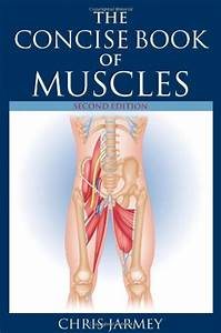 Human Muscles Diagram  Muscles Diagram
