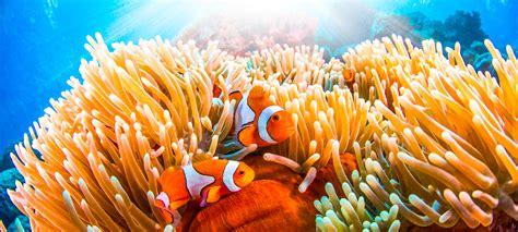 Great Barrier Reef | Fleet Science Center - San Diego, CA