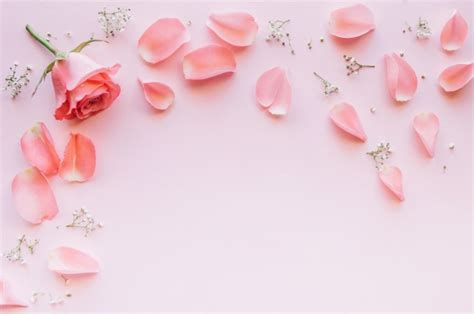 Pink Rose And Petals Over Light Pink Background With Space
