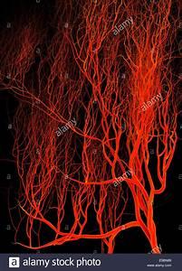 Nervous Or Blood System  Medical Illustration Stock Photo