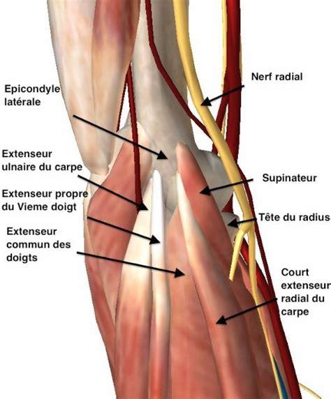 la tendinite du coude nomm 233 e 233 picondylite ou 233 pitrochl 233 ite par l unit 233 de chirurgie de l