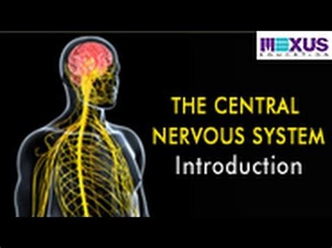 the central nervous system introduction
