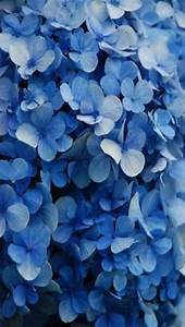 Blue Floral Backgrounds Tumblr | www.imgkid.com - The ...