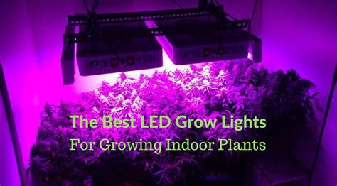 best grow lights for seedlings the best led grow lights for growing indoor plants buyer