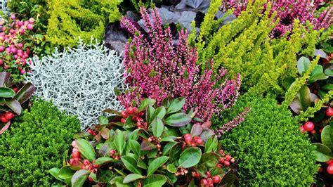 Herbst Winterbepflanzung Garten by K 252 Bel Und Balkonk 228 Sten Herbstlich Bepflanzen Ndr De