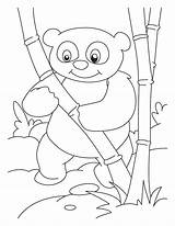 Panda Coloring Bamboo Pages Printable Drawing Pandas Anime Bear Lover Giant Getdrawings Tree Library Getcolorings sketch template