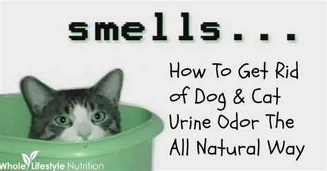Get Rid Of Dog And Cat Urine Odors The All Natural Way Cheap Carpet Cleaning Fort Wayne Indiana Vinegar Baking Soda Coit Escondido Installation Ottawa Specials Master S Touch Mckinney Tx Emmy Awards 2017 Red Pictures Dresses New Jersey How To Stretch With A Kicker