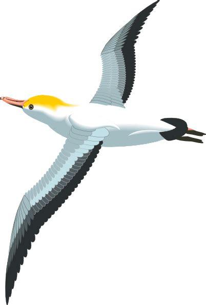Seagull Clipart Flying Sea Gull Clip At Clker Vector Clip