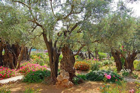 Column The Garden Of Gethsemane  Current Publishing