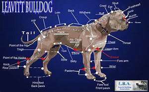 File Leavitt Bulldog Body Diagram Jpg
