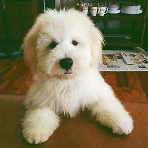 The 25+ best Teddy bear dogs ideas on Pinterest | Teddy ...