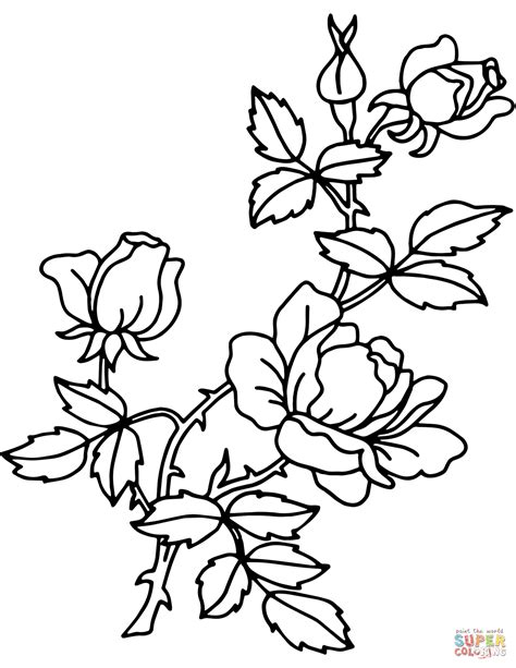 disegni di da stare gratis disegno di rosa da colorare disegni da colorare e stare