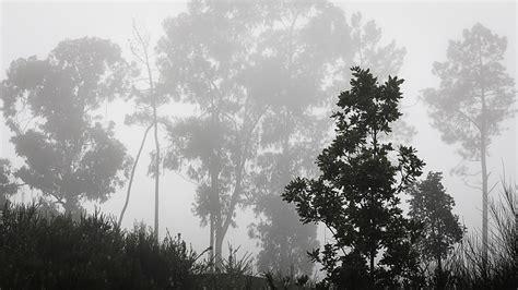 images landscape tree nature branch cloud
