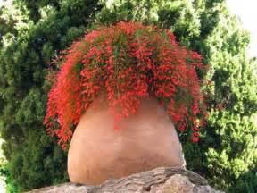 Plantes De Bureau Sans Soleil by L Hivernage Des Plantes En Pot
