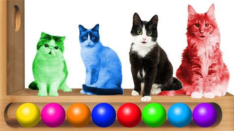 Learn Colors For Children With Colorful Cats Xylophone #h