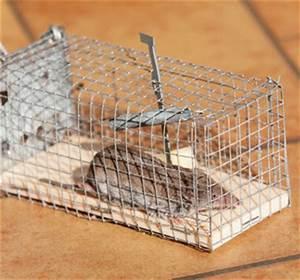 Produit Pour Tuer Les Rats : comment eliminer les rats taupier sur la france ~ Voncanada.com Idées de Décoration