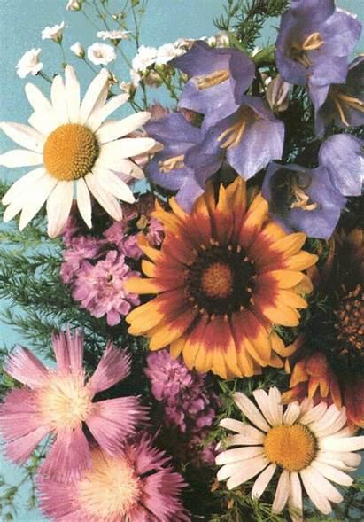 Flowers Indie Nature Flower Grunge Pretty Analog