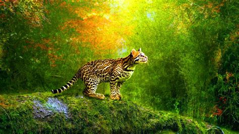 3d Moving Wallpapers For Android by 3d Moving Wallpaper Widescreen Abstract Wallpapers