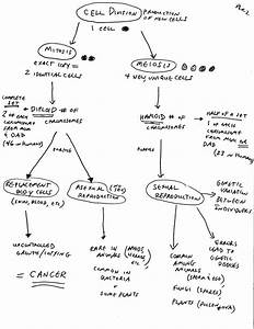 The Study Of Life  U2014 Biology  Cell Cycle Overview  Concept Map
