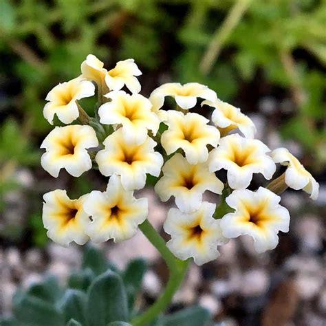 The Ecological Benefits Of Native Hawaiian Plants  Hui Kū