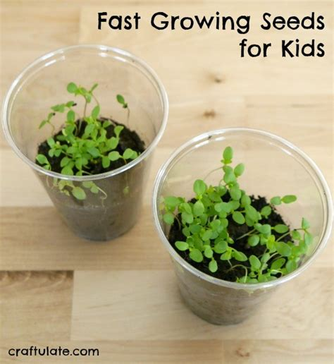 fast growing fast growing seeds for kids craftulate