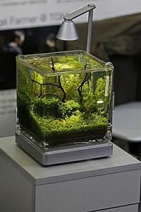 Bonsai Im Glas : top 10 ideen f r au ergew hnliche dekoration ~ Eleganceandgraceweddings.com Haus und Dekorationen