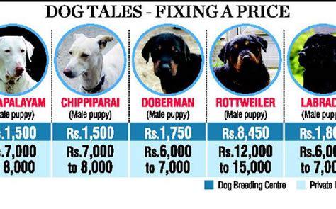 dog centre spells good news  native breeds tamil nadu